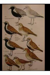 Wir bestimmen Die Vögel Europas - Régikönyvek