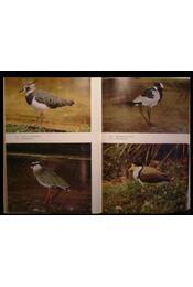 Wasservögel in Freiland und Gehege - Régikönyvek